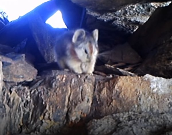 В Китае засняли на видео самое скрытное существо на планете
