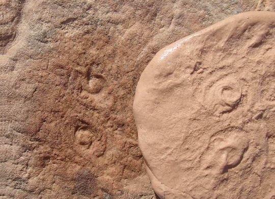 Доисторическое животное со дна океана ученые назвали Обамой