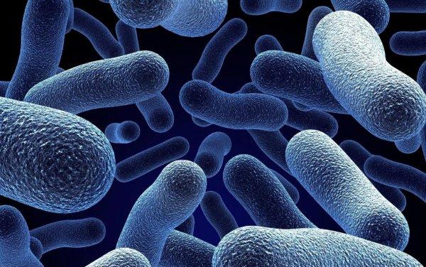 Ученые создали бактерии, которые невозможно убить