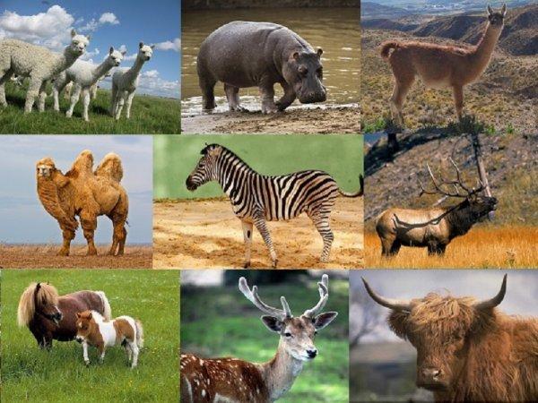 Ученые рассказали, как мошонка у животных появилась между ног