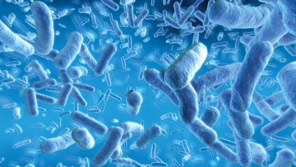 Заявление ученых: Люди состоят из человеческих клеток только на 43%
