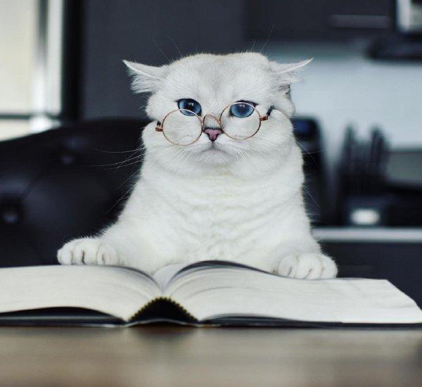 Ученые: Кошачьи паразиты превращают людей в бизнесменов
