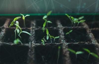 Компьютер предскажет рост растений по фото