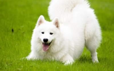 Японским ученым удалось управлять собакой с помощью лазера